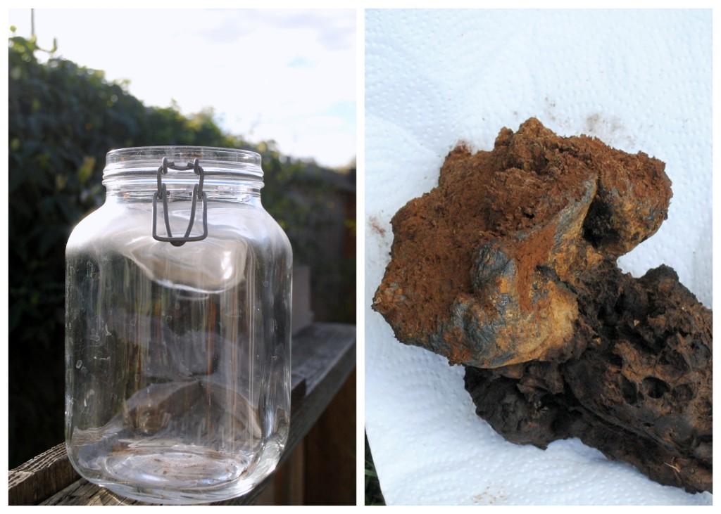 Natural dye with mushroom Pisolithus tinctorius