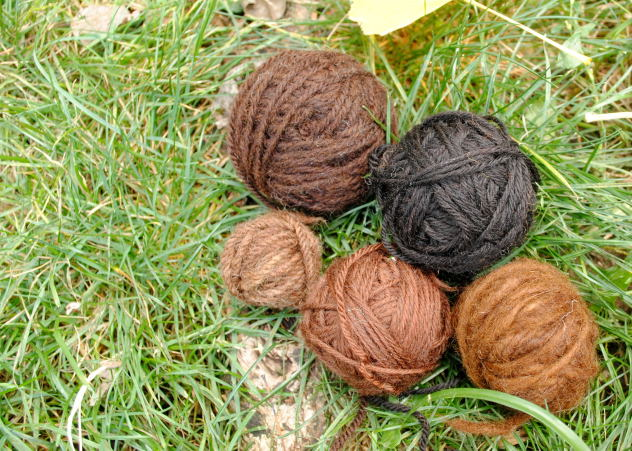 Yarn naturally dyed with mushroom Pisolithus tinctorius