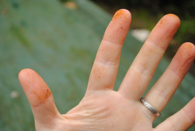 See how my fingers are stained from touching them? I recommend using gloves with dye. Unless you like orange fingers.