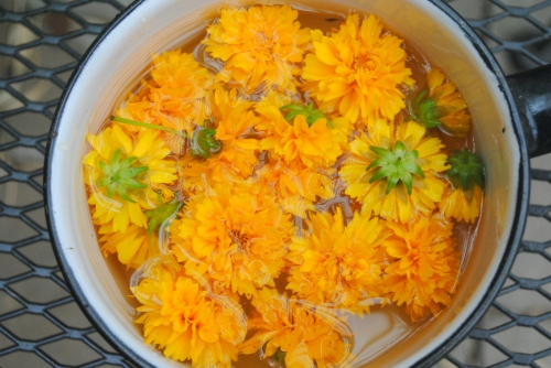 Coreopsis flowers soaking in water