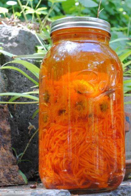 Coreopsis Solar Dye