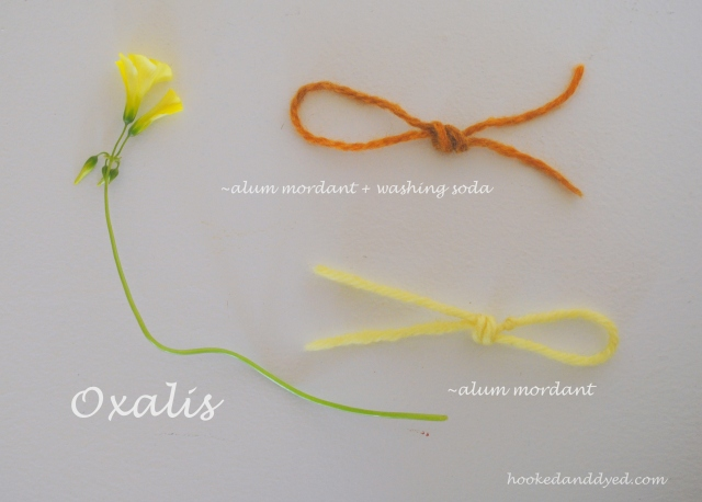 Oxalis dye, with and without washing soda