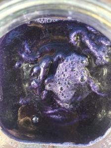 Black Bean purple dye