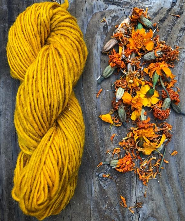 marigold, marigold dye, yellow yarn, natural dye, wool dyed with marigold