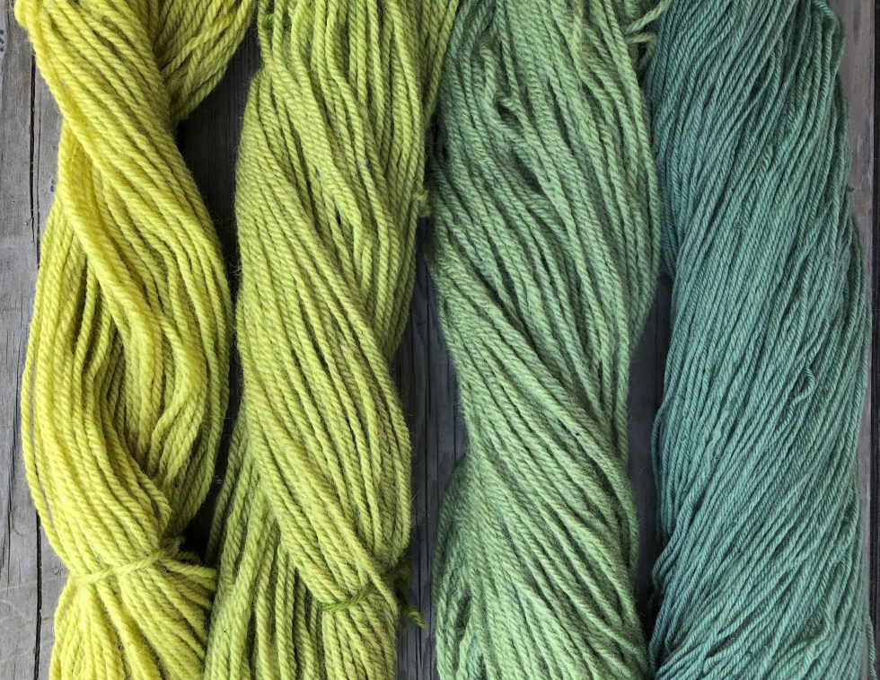 Wool dyed with privet berries
