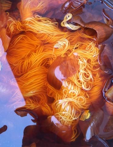 onion skins in dye pot